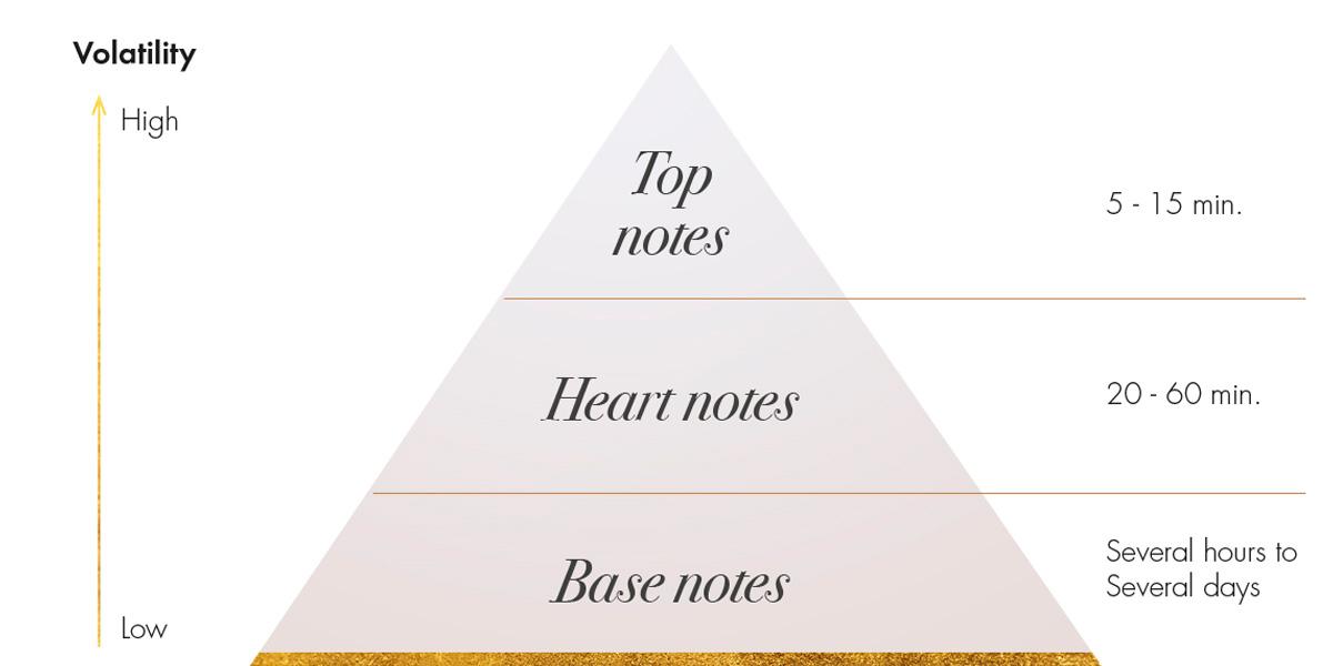 susunan aroma parfum